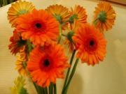 R36 Gerbera mini oranžová