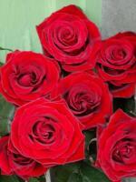 R53 Růže - délka 70cm červená
