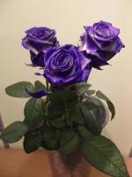 U0 Růže - délka 80 cm modrá