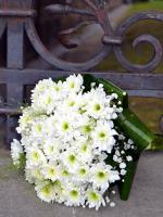 S11 Svatební bílá