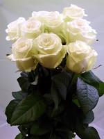 Z2 Dlouhé růže 7 ks